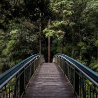 Pathway of curved bridge in a tall lush jungle